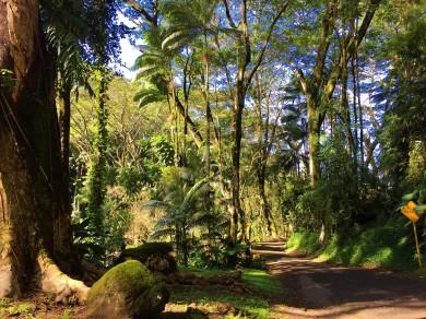 L'arrivée au parc Kolekole est très impressionnante. La majestuosité de la forêt nous laisse sans voix!