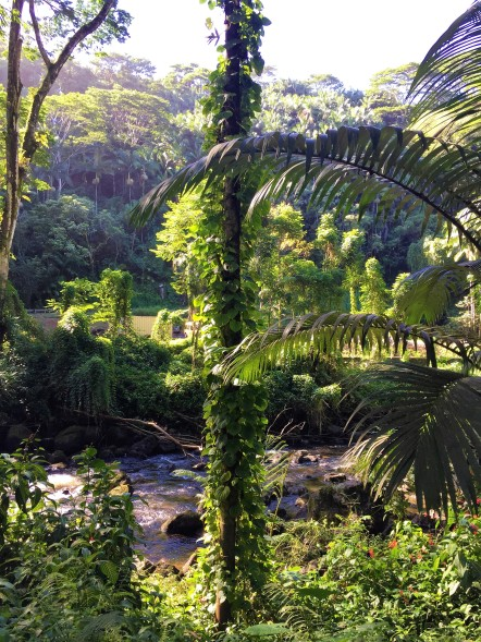 Rivière au Parc Kolekole