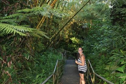 Les bambous et lianes font partis contantes des RainForest de la Côte Est.